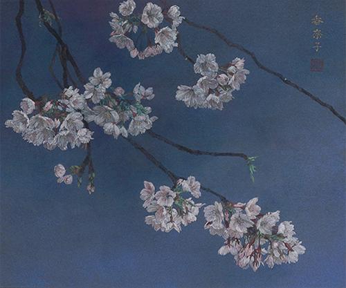 烏帽子の桜